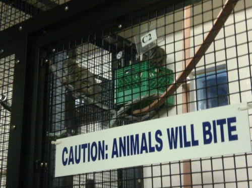 "Sign at the Lemur Center: ""Caution: Animals will bite"""
