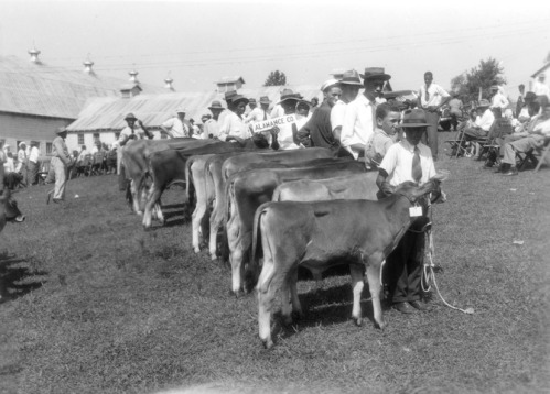 """4-H Club Members Standing with their Cows at the Negro Junior Dairy Show in Greensboro, North Carolina,"" 1945"