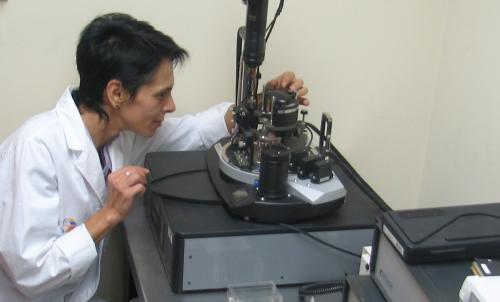 Dr. Svetlana Fialkova