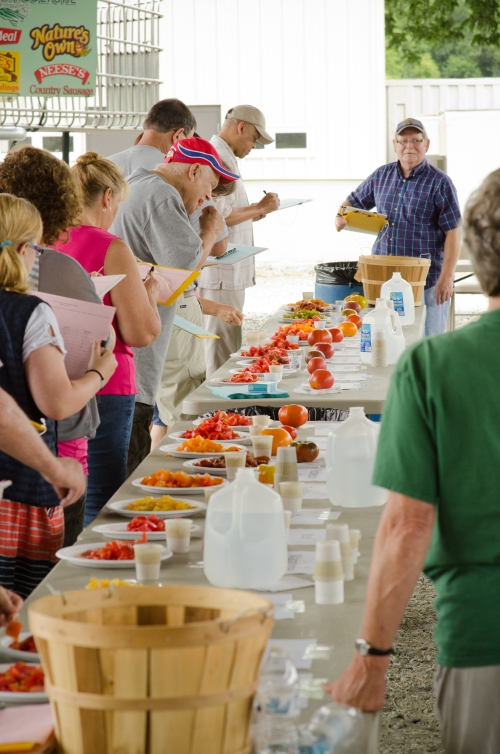 A line of tomato tasters at the 2012 festival